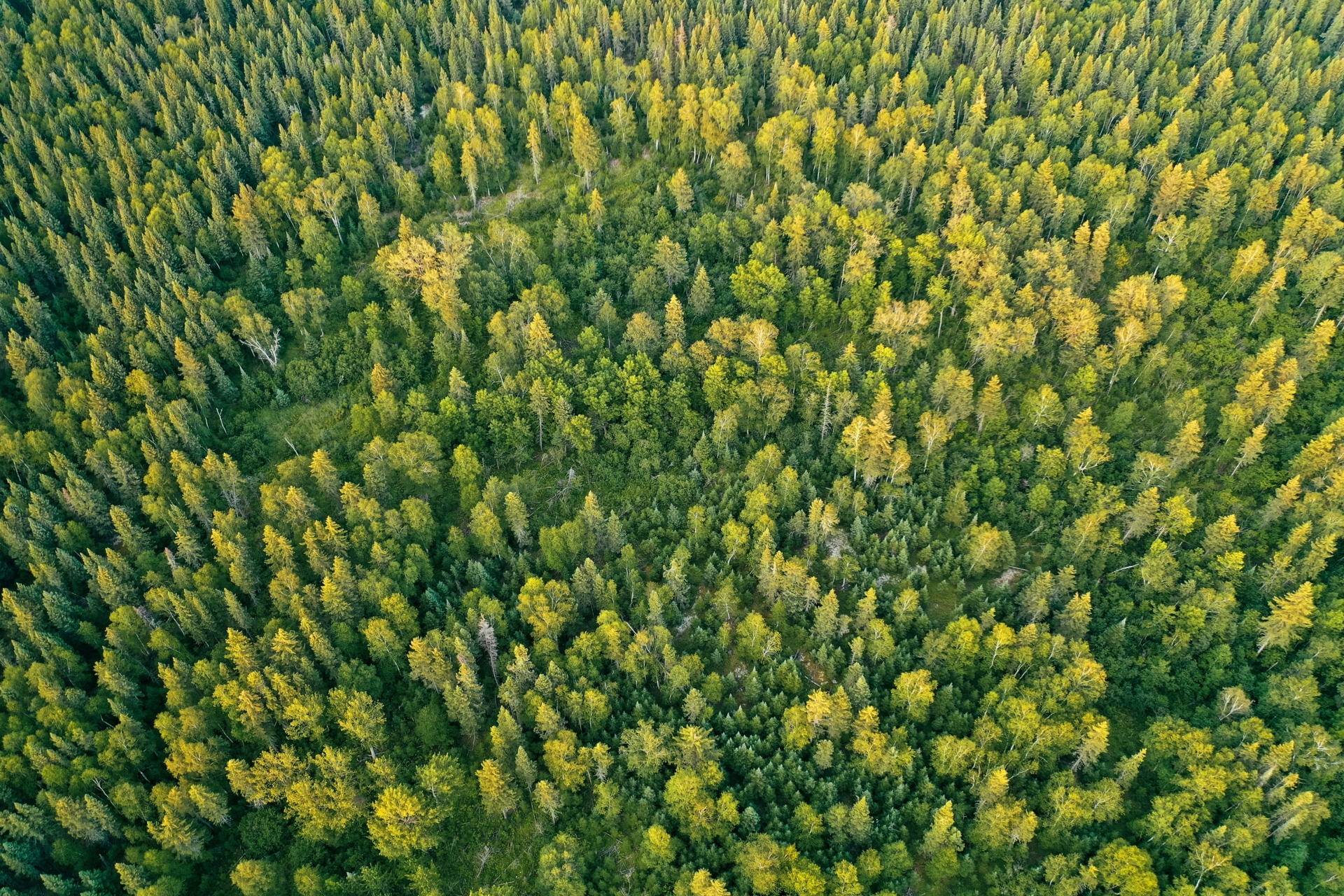 thumb_overhead-aerial-drone-shot-thick-beautiful-forest-during-sunny-daytime_1611140329.jpg